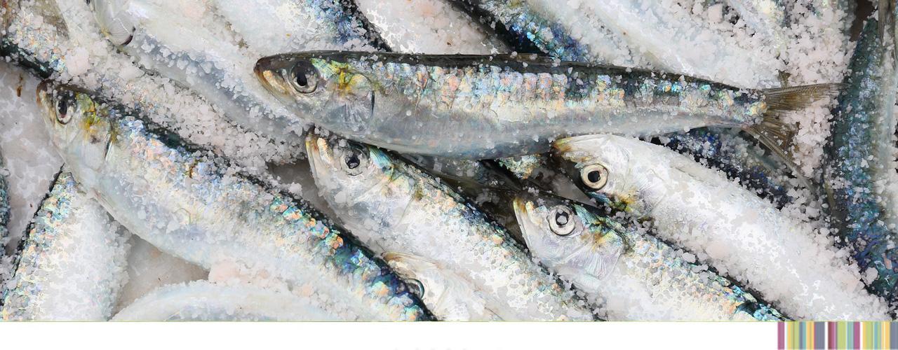 sardinasmercaolid